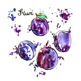 Hand drawn plums Royalty Free Stock Photos
