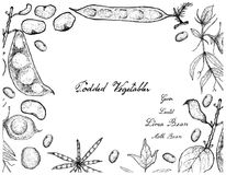 Hand Drawn of Podded Vegetables Frame on White Background. Vegetable, Illustration Frame of Hand Drawn Sketch Fresh Podded Vegetables Isolated on White Stock Photo