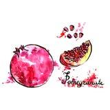 Hand drawn pomegranate Royalty Free Stock Photography