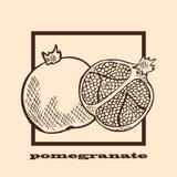 Hand drawn pomegranates Royalty Free Stock Photo
