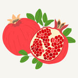 Hand drawn pomegranates in one piece and sliced in half. Isolated on white background. Vector illustration royalty free illustration