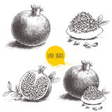 Hand drawn pomegranates set. Pomegranates with seeds and leafs. Stock Photos