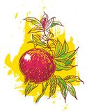 Hand drawn pomegrante Stock Image
