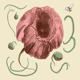Hand-drawn poppie in graphic style. In pastel shades Vector Illustration