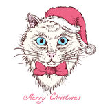 Hand drawn portrait of a cat  in a Christmas hat. Royalty Free Stock Photography