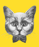 Hand drawn portrait of Cat with glasses and bow tie. Vector  elements Stock Photos
