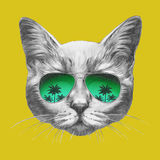 Hand drawn portrait of Cat with mirror sunglasses. Vector  elements Stock Photo