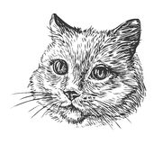 Hand-drawn portrait of cat. Sketch vector illustration Royalty Free Stock Photo