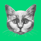 Hand drawn portrait of Cat. Vector  elements Royalty Free Stock Images