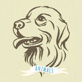 Hand drawn portrait of dog labrador Stock Photography