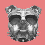 Hand drawn portrait of English Bulldog  with collar and sunglasses. Vector  elements Royalty Free Stock Photo