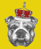Hand drawn portrait of English Bulldog with crown. Vector  elements Stock Photos