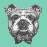 Hand drawn portrait of English Bulldog with glasses and bow tie. Stock Photos
