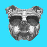 Hand drawn portrait of English Bulldog with sunglasses. Vector  elements Stock Photo