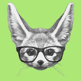 Hand drawn portrait of Fennec Fox with glasses. Stock Images
