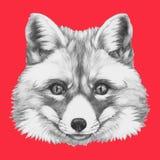 Hand drawn portrait of Fox. Royalty Free Stock Photo
