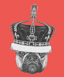 Hand drawn portrait of French Bulldog  with crown. Vector Stock Photos