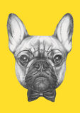 Hand drawn portrait of French Bulldog with glasses and bow tie. Vector  elements Stock Photo