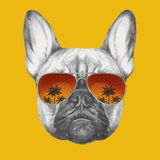 Hand drawn portrait of French Bulldog with mirror sunglasses. Vector  elements Stock Images