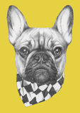 Hand drawn portrait of French Bulldog  with scarf. Vector  elements Royalty Free Stock Image