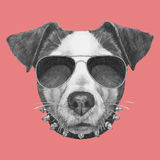 Hand drawn portrait of Jack Russell with collar and sunglasses. Vector  elements Royalty Free Stock Photos
