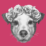 Hand drawn portrait of Jack Russell with floral head wreath. Vector  elements Stock Photo