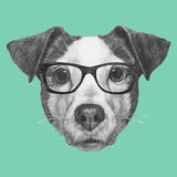 Hand drawn portrait of Jack Russell with glasses. Vector  elements Stock Photography