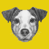 Hand drawn portrait of Jack Russell. Vector  elements Royalty Free Stock Photos