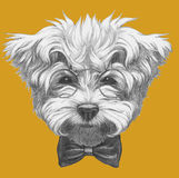 Hand drawn portrait of Maltese Poodle with glasses and bow tie.