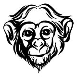 Hand drawn portrait of  monkey chimpanzee. Black and white Royalty Free Stock Photo