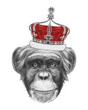 Hand drawn portrait of Monkey with crown. Vector isolated elements Stock Photos