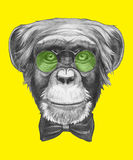 Hand drawn portrait of Monkey with glasses and bow tie. Vector  elements Stock Image