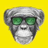 Hand drawn portrait of Monkey with glasses. Vector  elements Royalty Free Stock Image