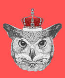 Hand drawn portrait of Owl with crown. Vector  elements Stock Photos