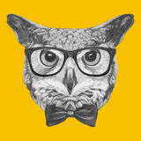 Hand drawn portrait of Owl with glasses and bow tie. Vector  elements Stock Image