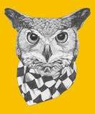 Hand drawn portrait of Owl with scarf. Royalty Free Stock Image