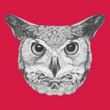 Hand drawn portrait of Owl. Vector  elements Royalty Free Stock Photo