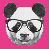 Hand drawn portrait of Panda with glasses. Vector  elements Stock Image