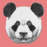Hand drawn portrait of Panda. Vector isolated elements Royalty Free Stock Photo
