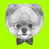 Hand drawn portrait of Pomeranian dog with glasses and bow tie. Hand drawn portrait of Pomeranian dog with glasses and bow tie . Vector  elements Stock Photography