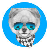 Hand drawn portrait of Pomeranian dog with mirror glasses and scarf. Stock Photos
