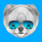 Hand drawn portrait of Pomeranian dog with mirror glasses. Vector isolated elements Stock Photos