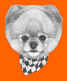 Hand drawn portrait of Pomeranian dog with scarf. Vector  elements Stock Photos