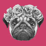 Hand drawn portrait of Pug Dog with floral head wreath. Vector  elements Stock Photography