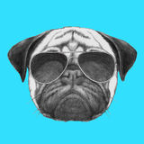 Hand drawn portrait of Pug Dog with sunglasses. Vector  elements Stock Images