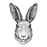 Hand-drawn portrait of rabbit. Easter bunny, sketch. Vector illustration. Isolated on white background stock illustration