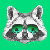 Hand drawn portrait of Raccoon with mirror sunglasses. Stock Images