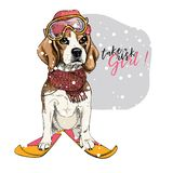 Hand drawn portrait of skiing beagle dog wearing hat, goggles and scarf. Vector Christmas illustration. Colored puppy. Xmas, New Year. Greeting card, party vector illustration