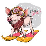 Hand drawn portrait of skiing pig wearing hat, goggles and scarf. Vector Christmas illustration. Colored piglet. Xmas. New Year symbol. Greeting card, party stock illustration
