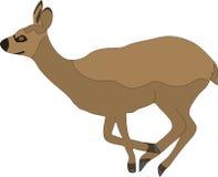 Hand drawn portrait of a wild klipspringer antelope Stock Image